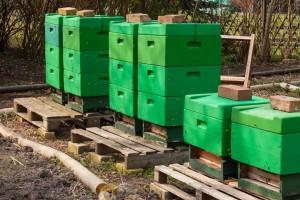 Flugverkehr bei unseren Bienenvölkern