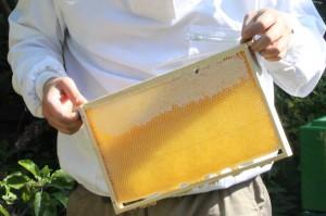 abgefegte Honigwabe