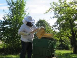 Abfegen der Honigwaben