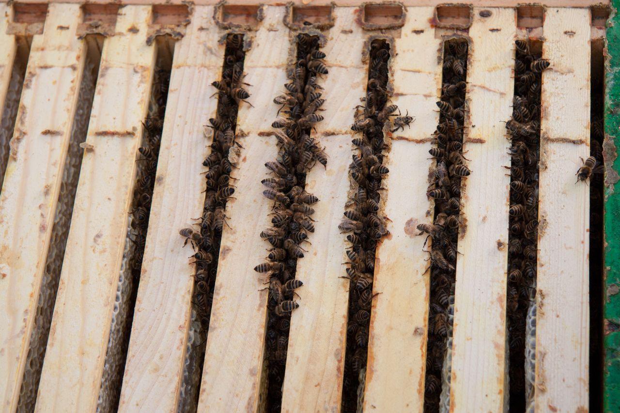 Halten Bienen Winterschlaf Imkerei Heine Stumpp
