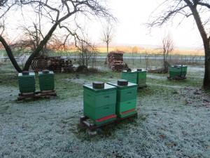 Winterlicher Bienenstand. Frost -5°C