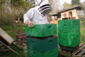 Die Honigräume sind aufgesetzt
