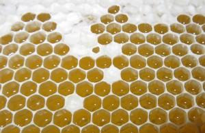 Die Zellen einer Honigwabe
