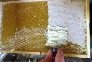 EIne Honigwabe wird entdeckelt.