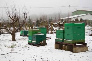 Schnee auf unserem Bienenstand.