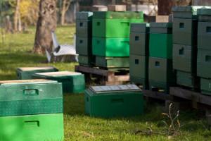 Die Honigräume werden den Völkern gegeben.