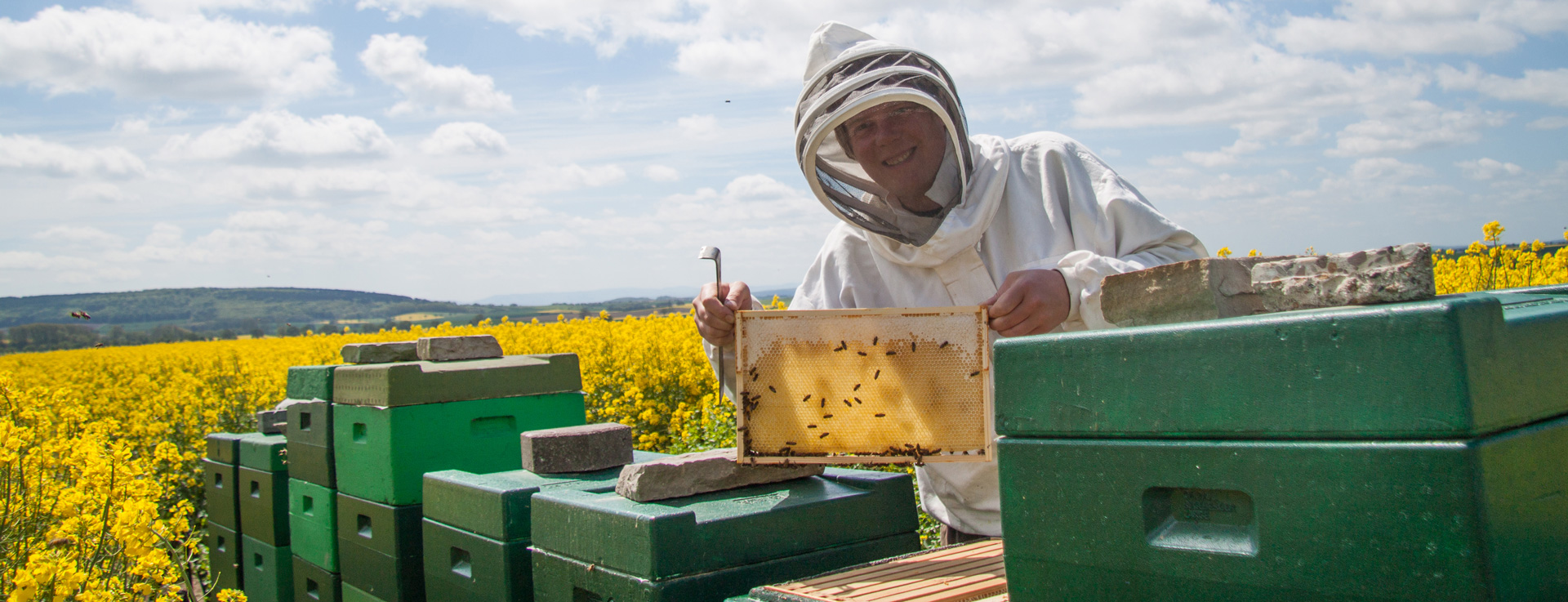 Unsere Bienen im Raps