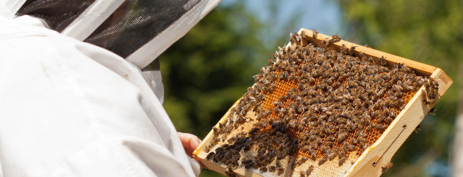 Durchsicht unserer Bienenvölker