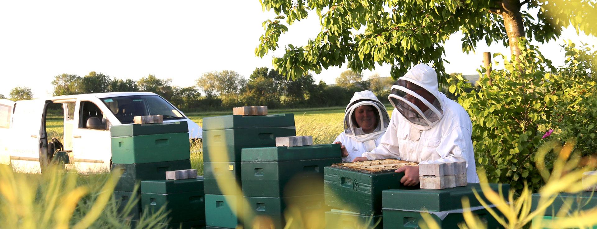Honigernte im Rapsfeld