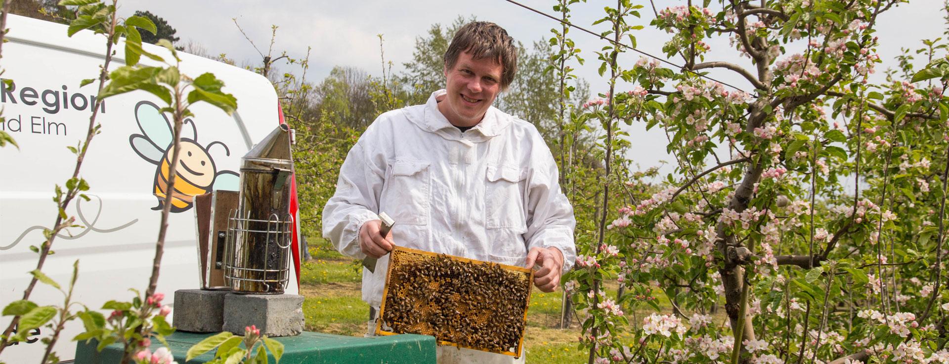 Bienen mitten in der Obstplantage
